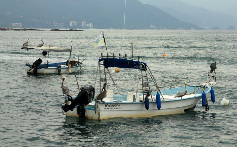 Pellicani che si siedono sui piccoli pescherecci in Puerto Vallarta fotografie stock
