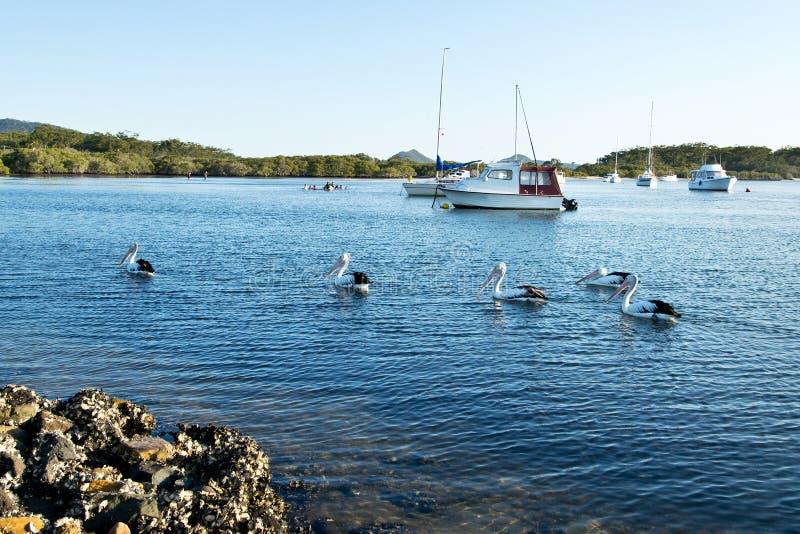 Pellicani e barche fotografia stock