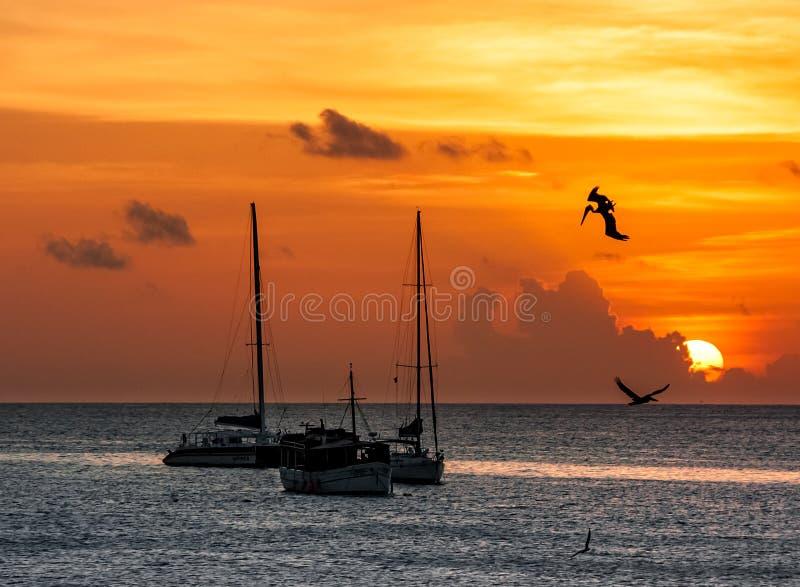 Pellicani sul tramonto fotografie stock
