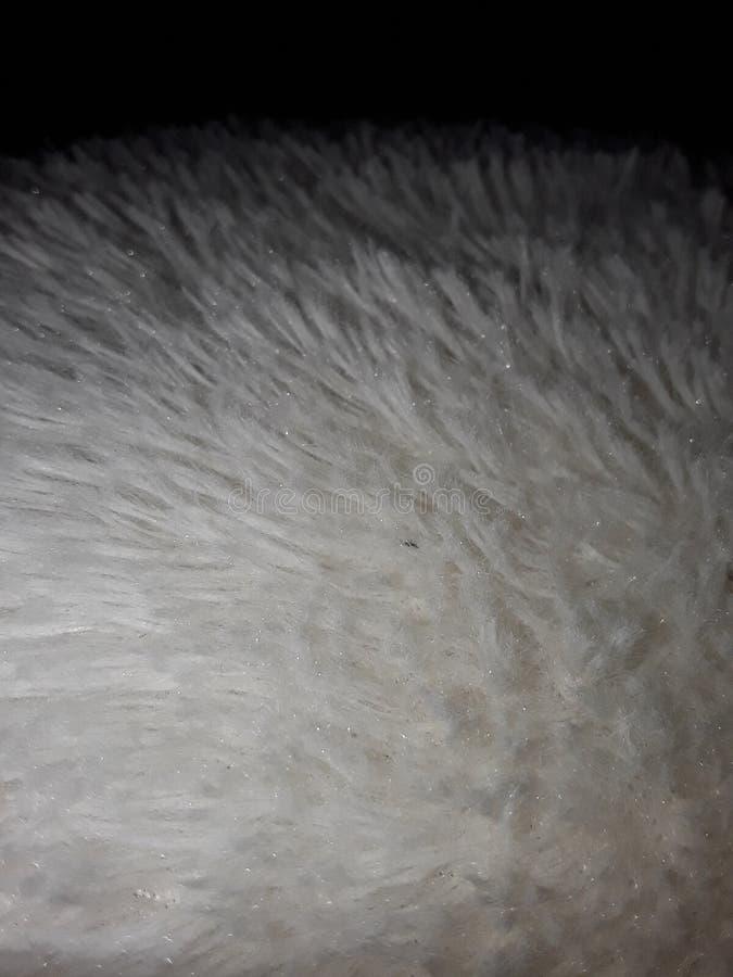 pelliccia immagine stock