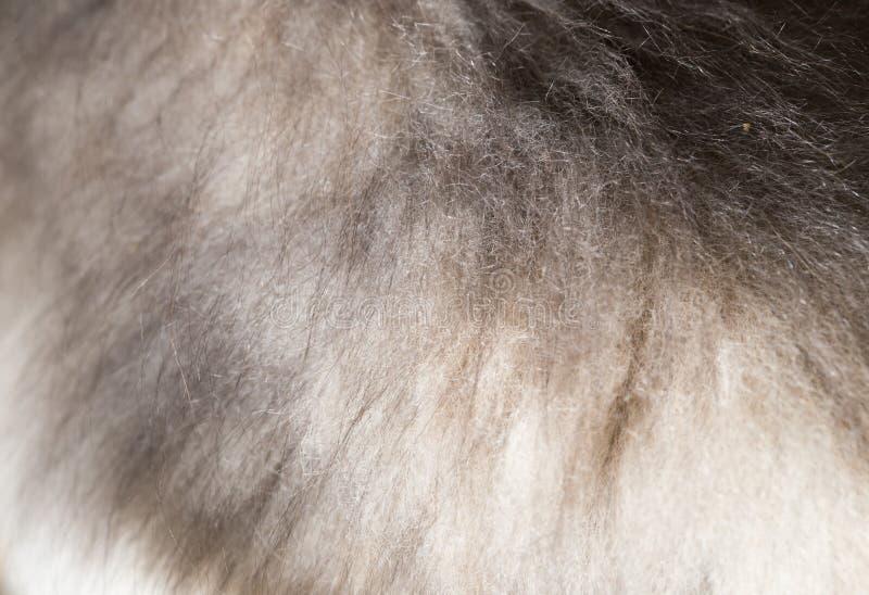 Pelliccia del cane come fondo immagine stock libera da diritti
