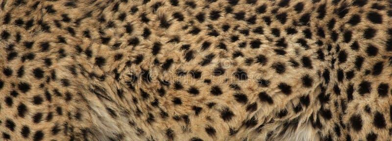 Pelliccia del ghepardo fotografia stock