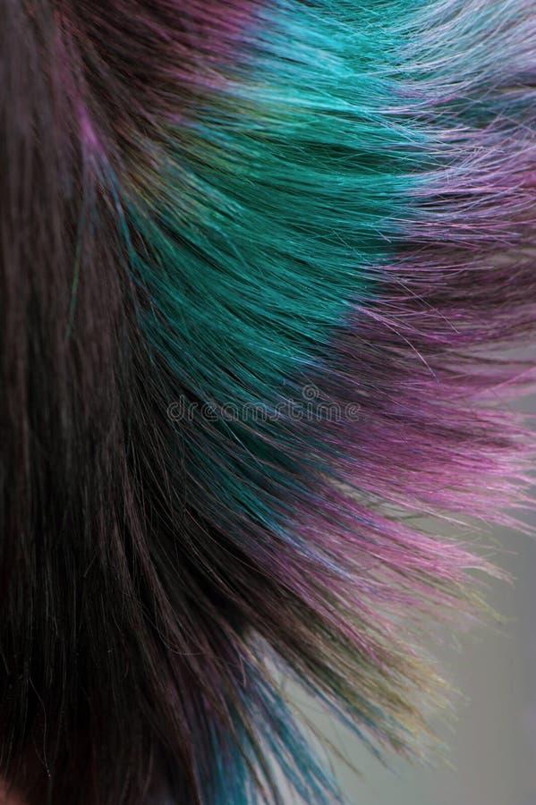 Pelo teñido, coloración del cabello profesional foto de archivo
