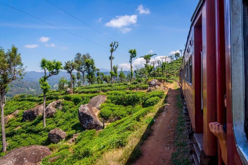 Pelo trem sobre a plantação de chá, Sri Lanka fotografia de stock