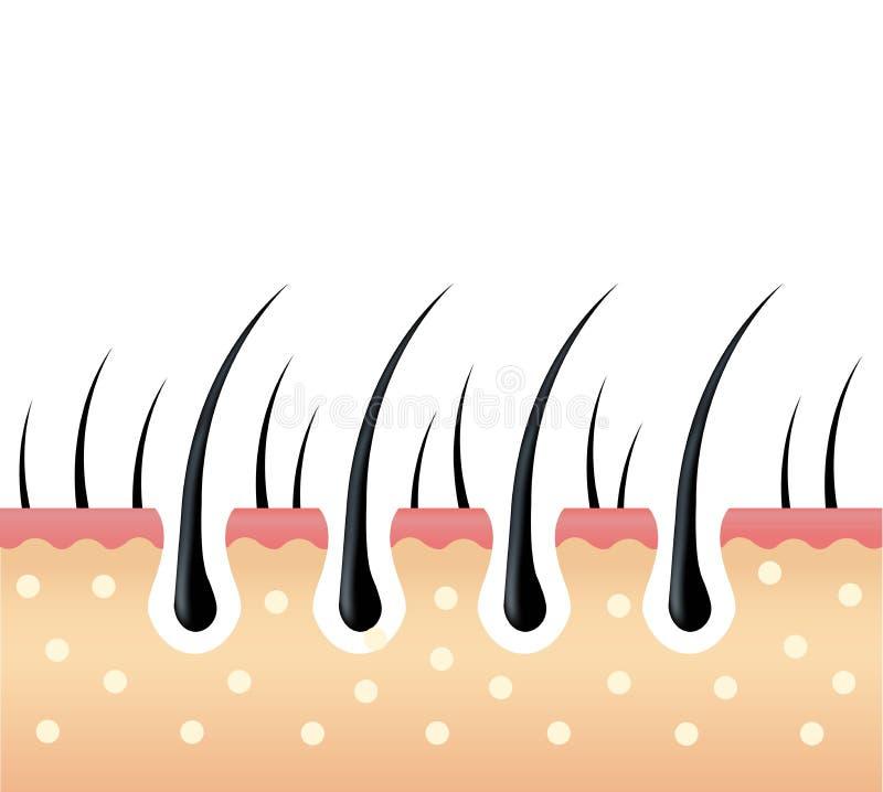 pelo y cuero cabelludo Tratamiento del ingrediente activo profundamente en el pelo y el cuero cabelludo ilustración del vector
