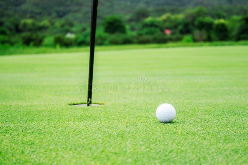 Pelota de golf en el césped verde imagenes de archivo