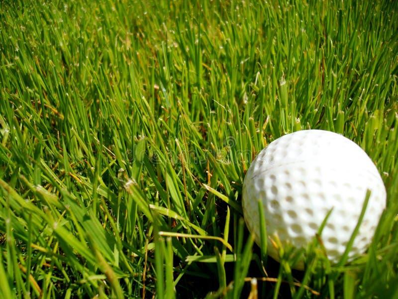 Pelota de golf en la gallineta de collar imagen de archivo