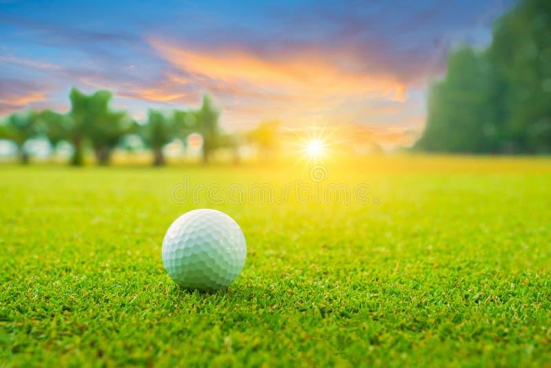 Pelota de golf en verde en campo de golf hermoso con puesta del sol Cierre de la pelota de golf para arriba en coures del golf en fotos de archivo libres de regalías