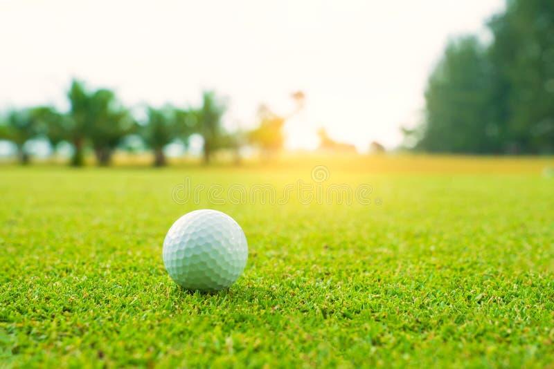 Pelota de golf en verde en campo de golf hermoso con puesta del sol Cierre de la pelota de golf para arriba en coures del golf en imagenes de archivo