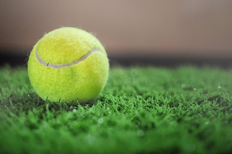 Pelota de tenis en la hierba verde foto de archivo