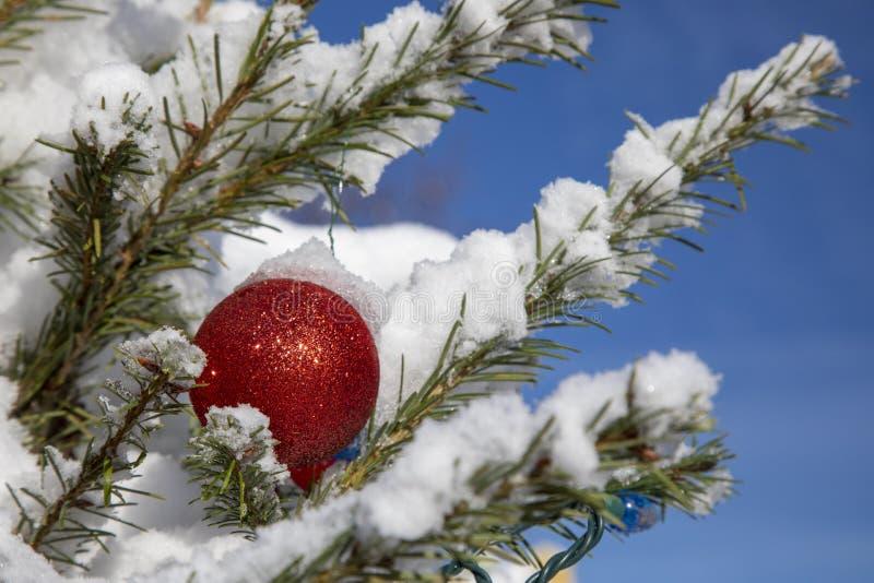 Pelota roja de Navidad en árbol nevado fotos de archivo