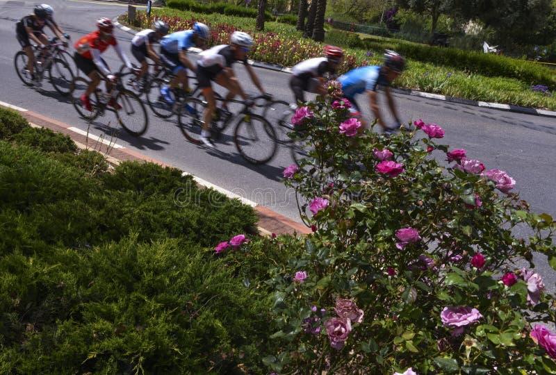 peloton av cykelryttare i ett lopp royaltyfri foto
