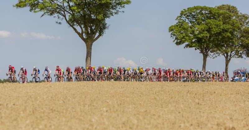 Peloton - Ronde van Frankrijk 2017 royalty-vrije stock foto's