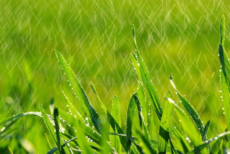 pelouse photographie stock