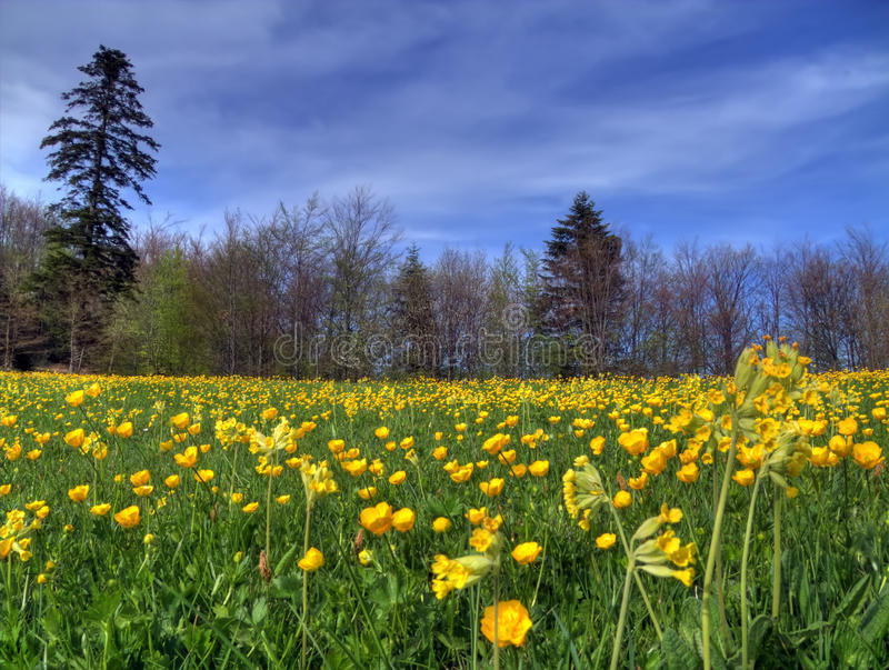Pelouse au printemps image stock