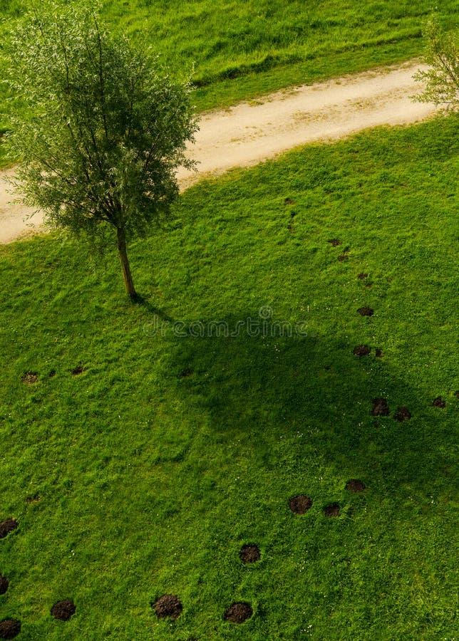 Pelouse avec des taupinières et un arbre photo stock