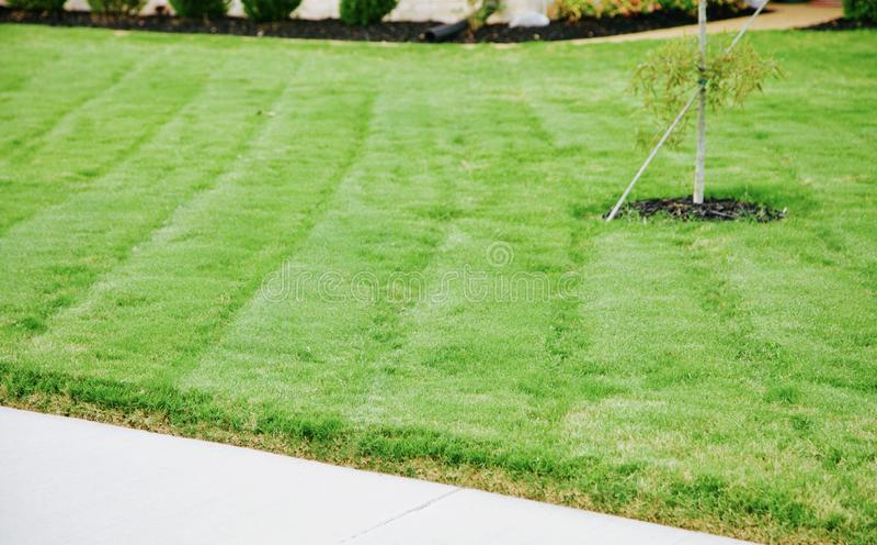 Pelouse d'herbe épaisse et verte image libre de droits