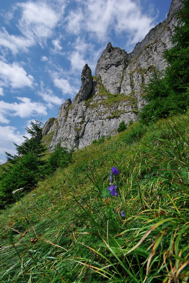 Pelouse de montagne images libres de droits