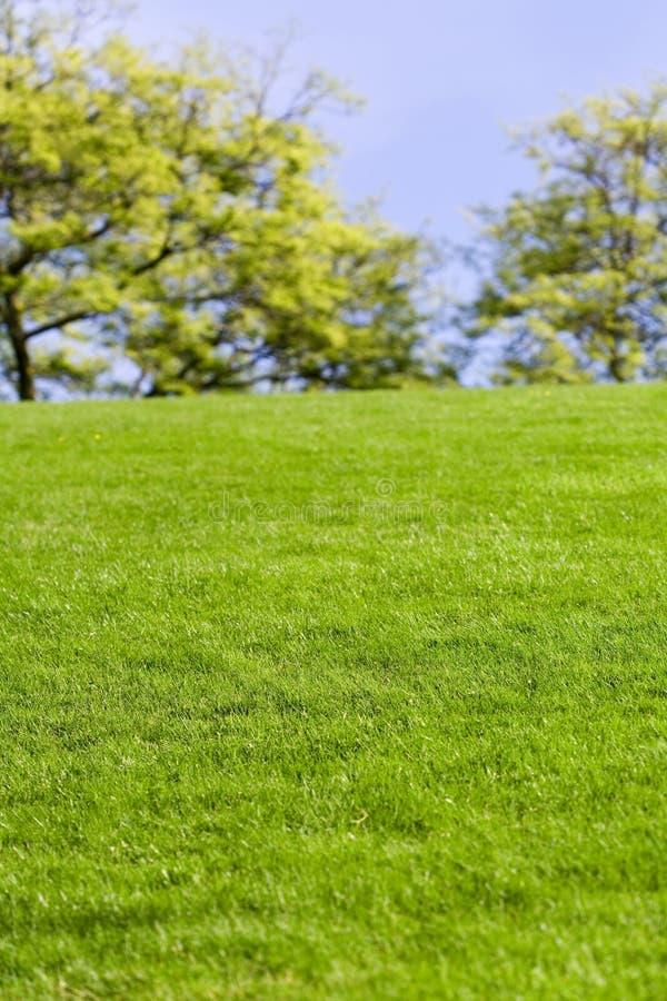 Pelouse et arbre verts photos libres de droits