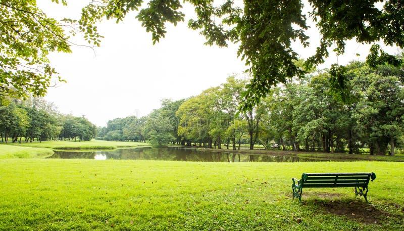 Pelouse et arbres verts photos stock
