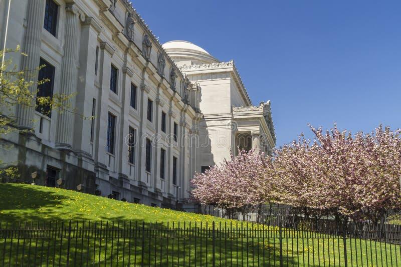 Pelouse et CHerry Trees de musée de Brooklyn image libre de droits