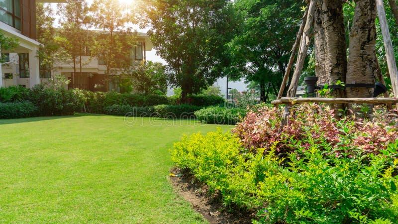 Pelouse lisse d'herbe verte fraîche de Burmuda comme tapis avec la forme de courbe du buisson, arbres sur le fond, bons paysages  photo stock