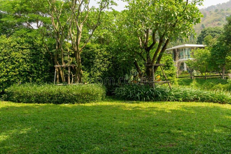 Pelouse lisse fraîche d'herbe verte comme tapis avec la forme de courbe du buisson, arbres sur le fond, bons lanscapes d'entretie photographie stock libre de droits
