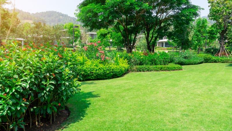 Pelouse lisse fraîche d'herbe verte comme tapis avec la forme de courbe du buisson, arbres sur le fond, bons paysages d'entretien photographie stock libre de droits