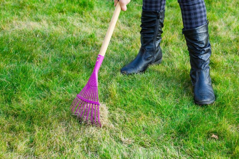 Pelouse verte de nettoyage par le râteau photos libres de droits