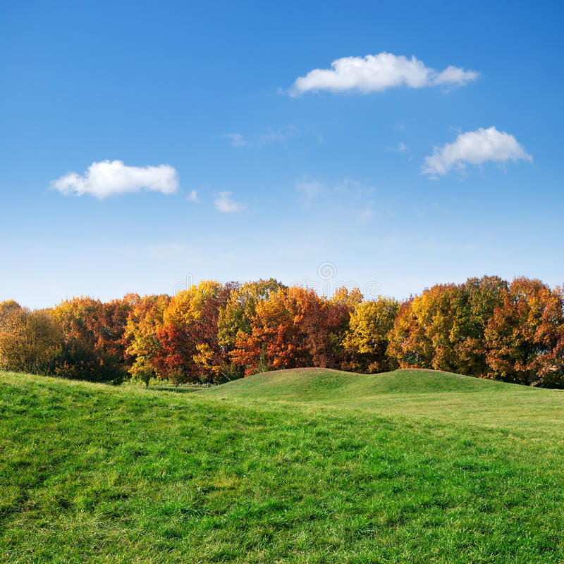 Pelouse verte et arbres colorés d'automne photos stock