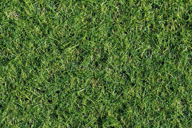 Pelouse verte pour le fond Texture de fond d'herbe verte Principal v photos libres de droits