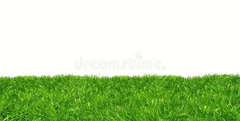 Pelouse verte sur le fond blanc photographie stock libre de droits
