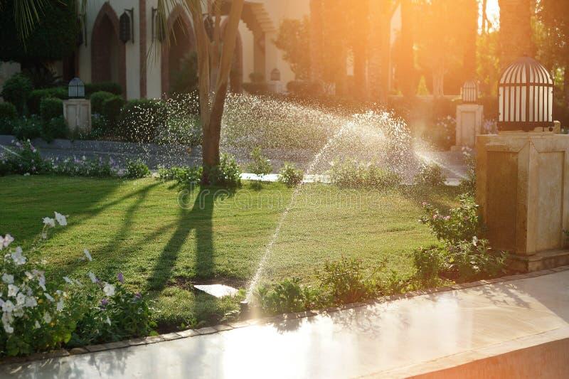 Pelouses de arrosage automatiques dans le jardin en été, contre le coucher du soleil image libre de droits