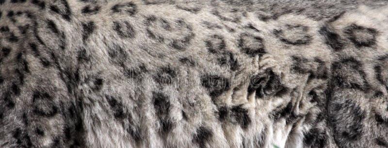 Pelt do leopardo de neve fotografia de stock royalty free