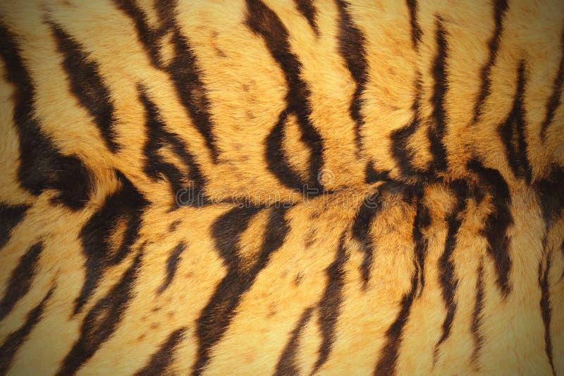 Pelt do tigre foto de stock