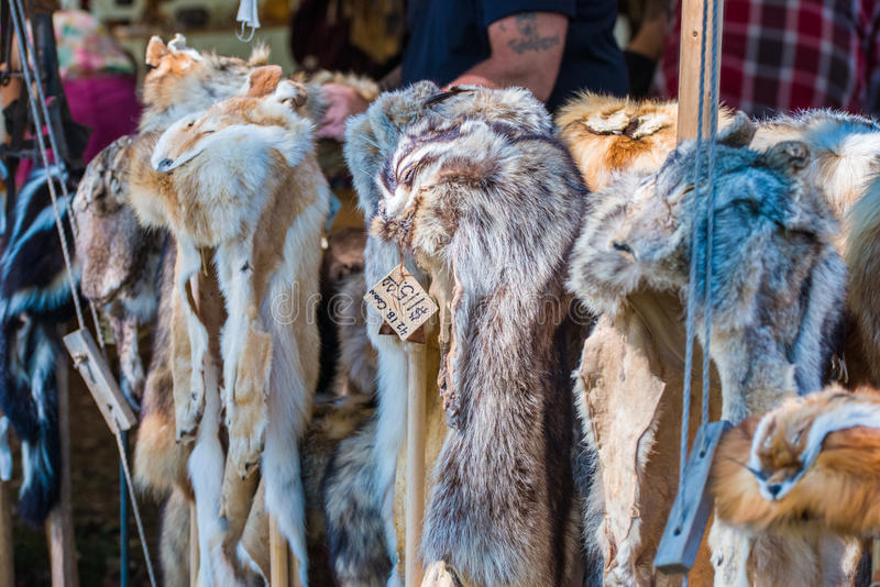 Pelts. Fox, skunk, linx and coyote pelts at a local rendezvous festival stock photo