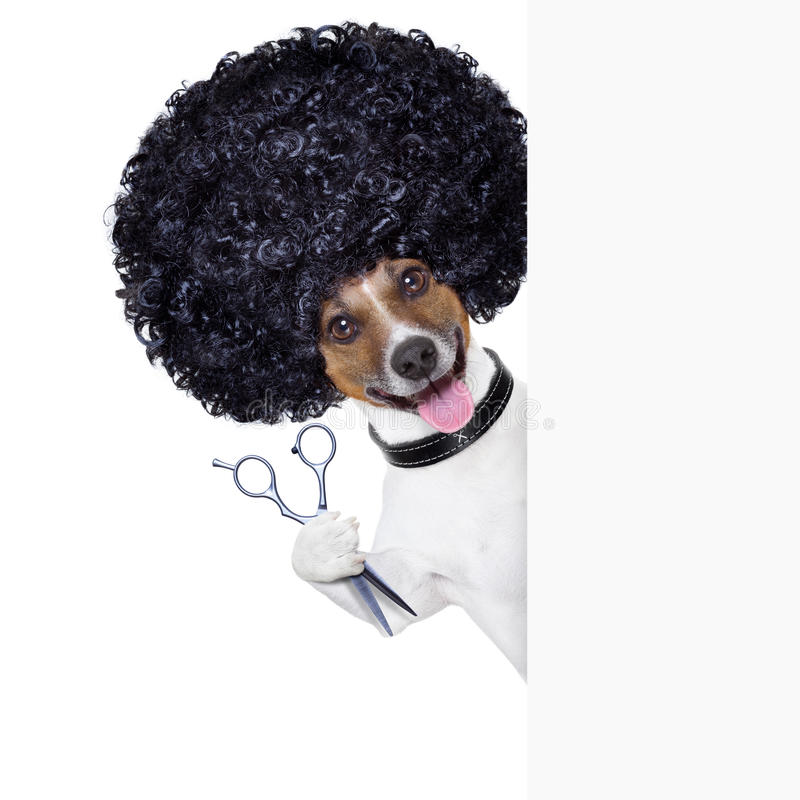 Peluquero   perro fotografía de archivo