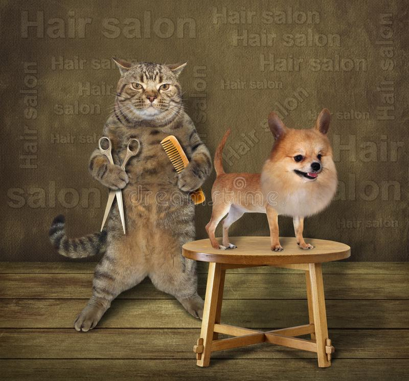 Peluquero y perro del gato fotografía de archivo