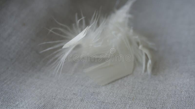 Pelusa y plumas blancas imagenes de archivo