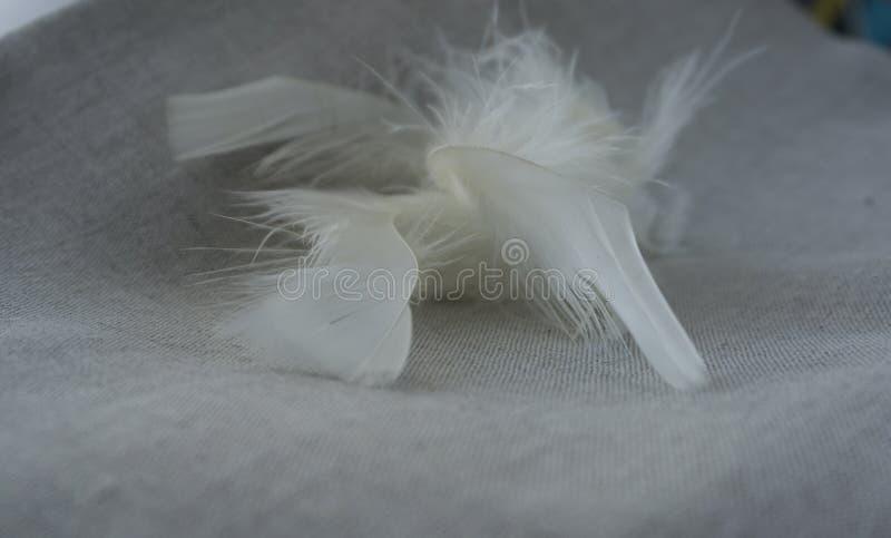Pelusa y plumas blancas fotografía de archivo libre de regalías