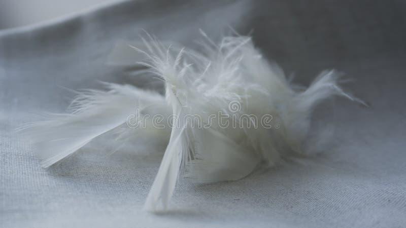 Pelusa y plumas blancas foto de archivo libre de regalías