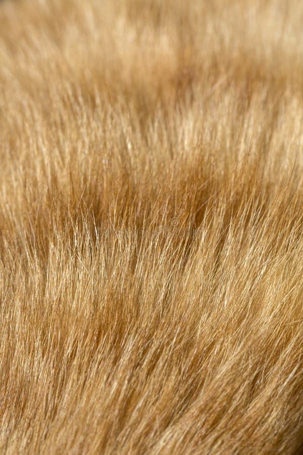 Pelz des Katzenabschlusses herauf Bild für Hintergrund lizenzfreies stockfoto
