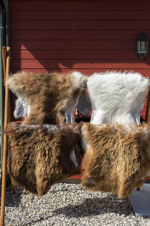 Pelze auf dem Holzregal bei Lofoten stockbild