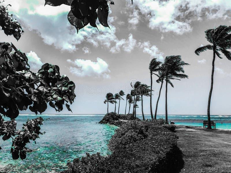 Península de la palmera fotografía de archivo libre de regalías