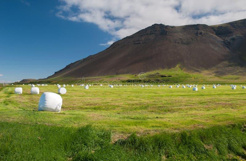 Península no verão, Islândia de Reykjanes imagens de stock