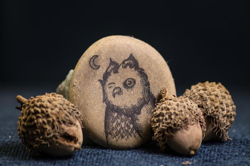 Pen and ink drawing of owl on flat stone accompanied by acorns stock photos