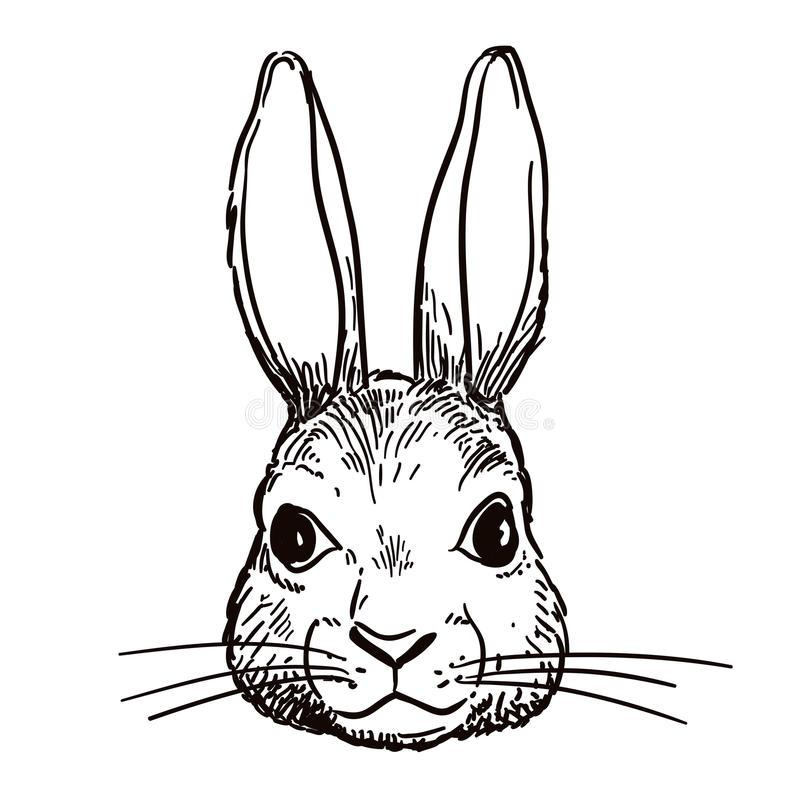 Pen and ink rabbit head sketch. Vector hand-drawn pen and ink black and white sketch character illustration of a bunny rabbit head portrait. Realistic vintage royalty free illustration