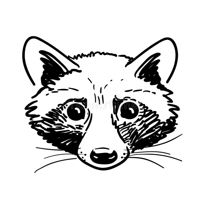 Pen And Ink Raccoon Head Sketch Stock Vector ... Raccoon Face Clip Art Black And White