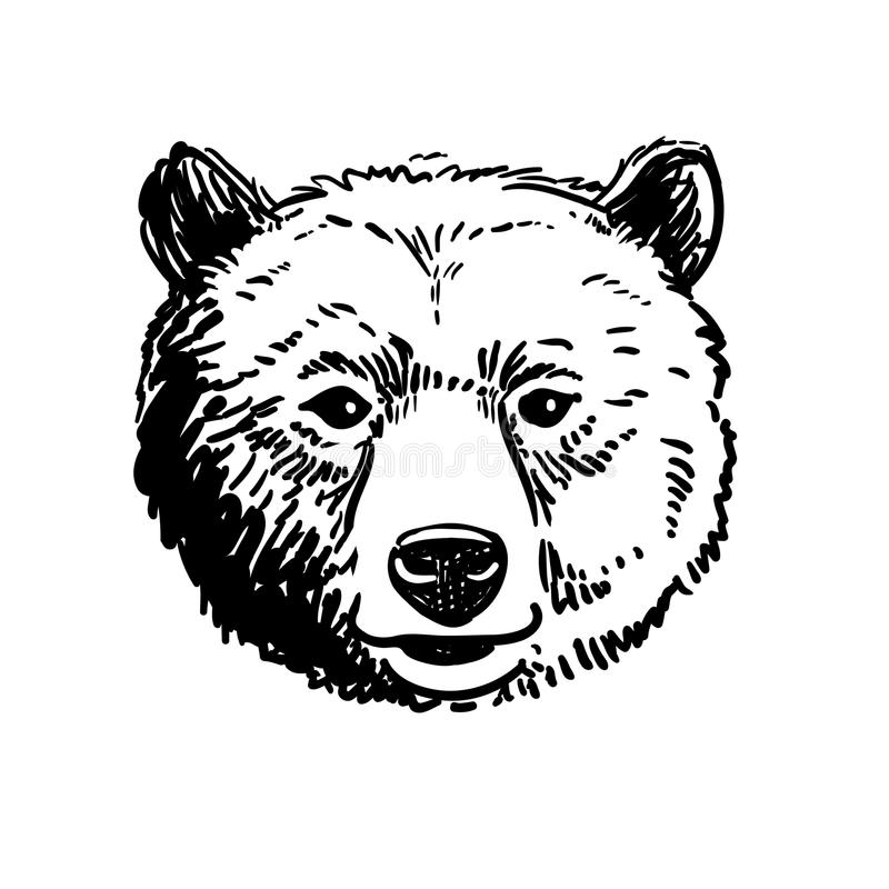 Pen and ink sketch of a bear head. Vector pen and ink hand drawn illustration of a bear head portrait facing forward. Retro vintage style sketch nature wildlife stock illustration