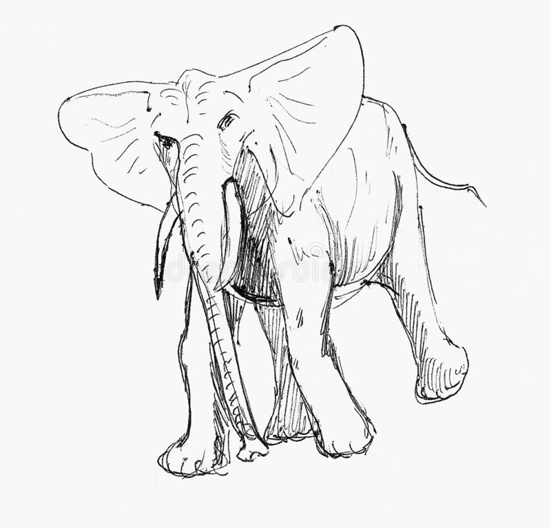 Pen sketch of an elephant stock illustration